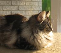 Hon är cool. Ligger gärna och tittar på omgivningen, men är det kattgodis på gång är hon först vid mattes eller husses fötter.