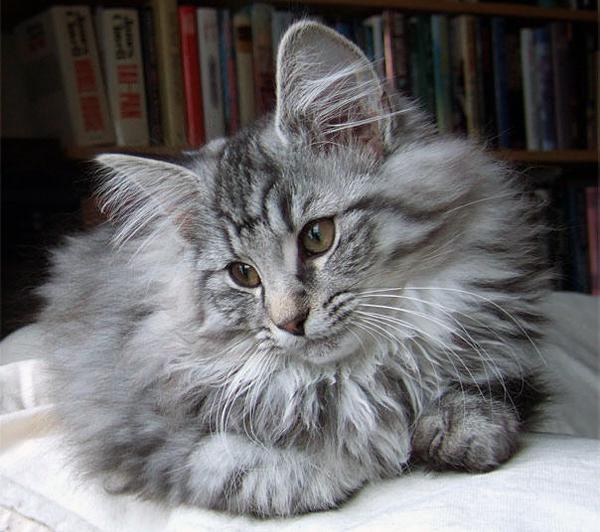 Loka är en pratig, intelligent katt. Hon kan räkna ut saker genom att sitta och betrakta det hon vill göra.