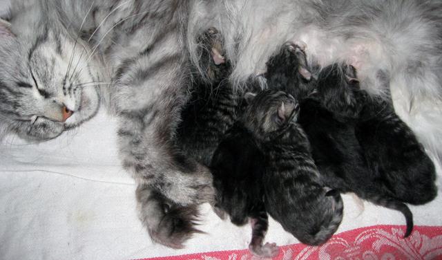 Alldeles nyfödda 1 juli 2010, med mamma Loka.