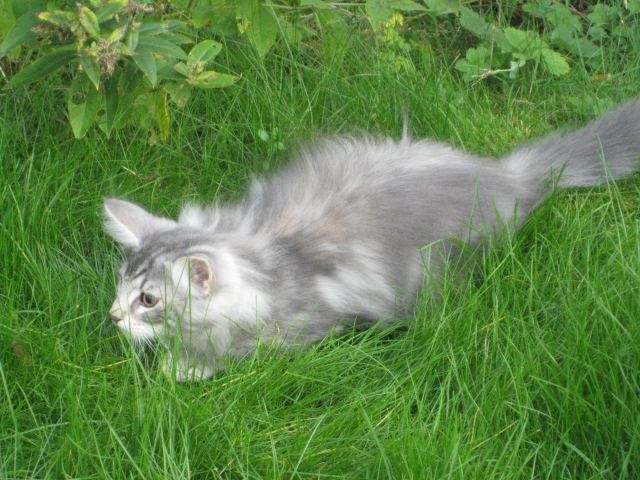 Jasmine på jakt i djungeln