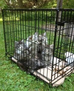 Loka och kattungarna på fikapaus i Hackelboö