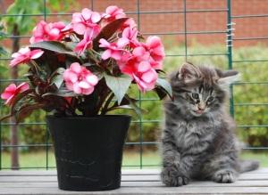 Titta mamma, en blomma som heter samma som jag, Lyckliga Lotta