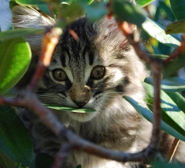 Lotta klättrar i Rododendronbusken