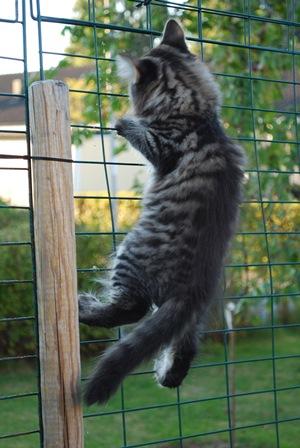Och Lotta klättrar på staketet till rastgården