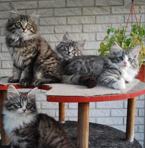 Till slut en bild på de duktiga kattungarna