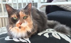 Fiona bor i Karlskoga och är fortfarande pigg idag vid 14 års ålder