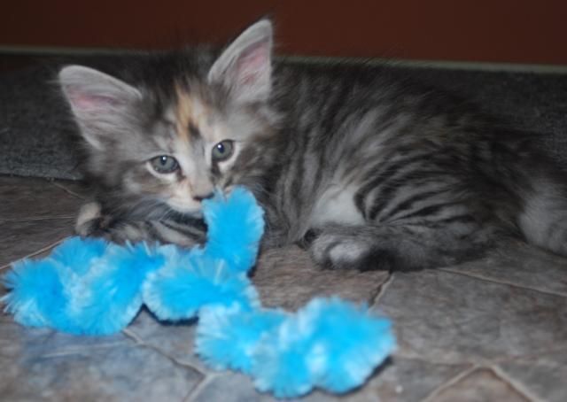 Maja har hittat en blå
