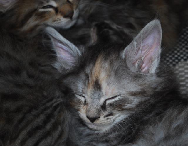 God natt säger Maja och kryper ihop med sina syskon