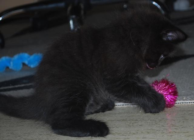 Majorn leker med en rosa boll