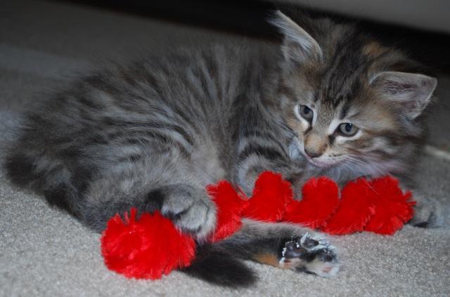 Mata Hari har hittat en röd leksak