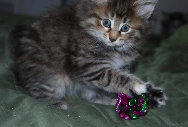 Mata Hari har hittat en prasselboll