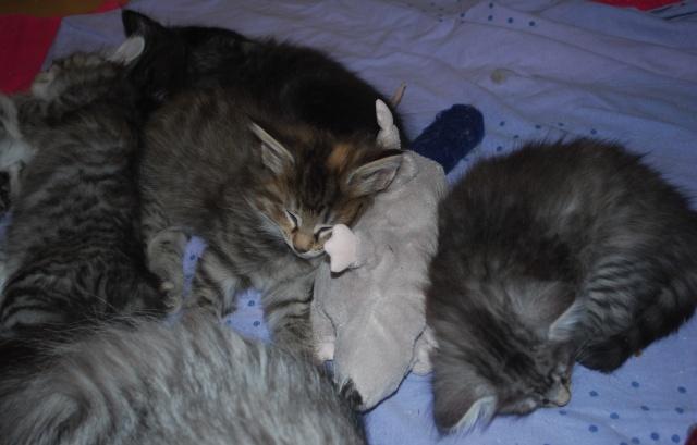 Efter maten sover vi