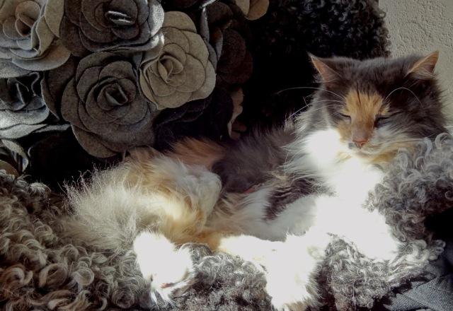 Fuchsia 14 år