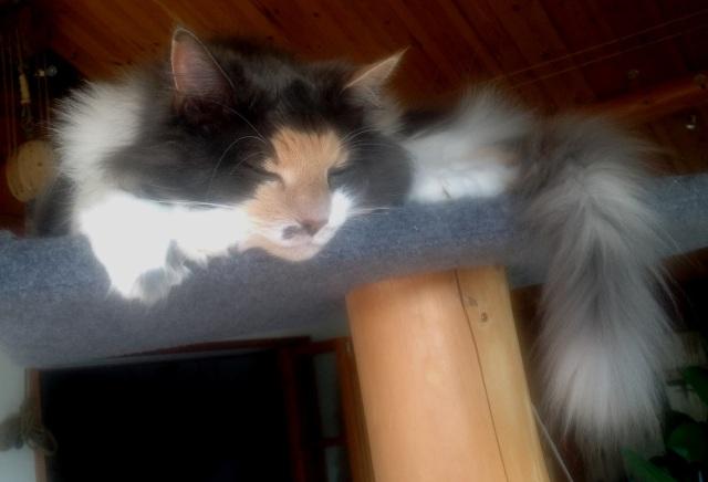Fuchsia/Olivia 14 år