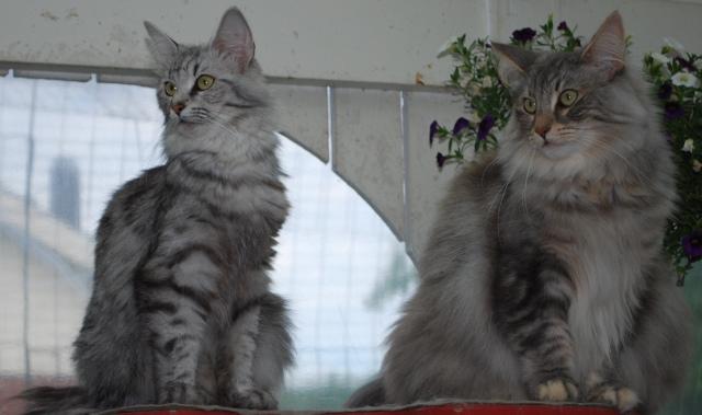 Loka och Jasmine