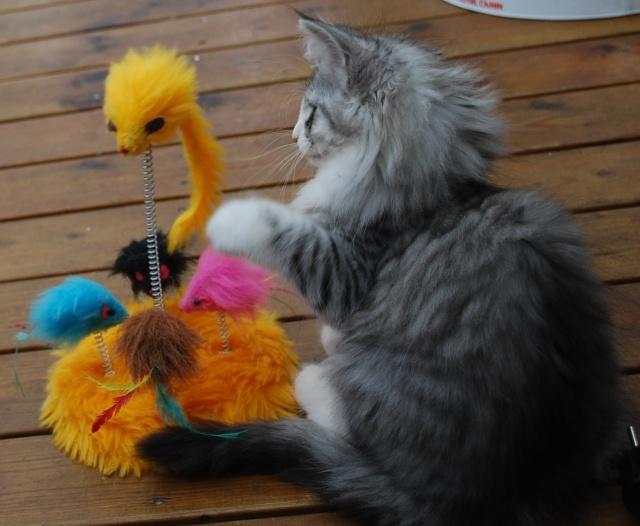 Madicken har hittat en ny leksak