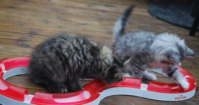 Men till slut fattade kattungarna att det var en ny leksak