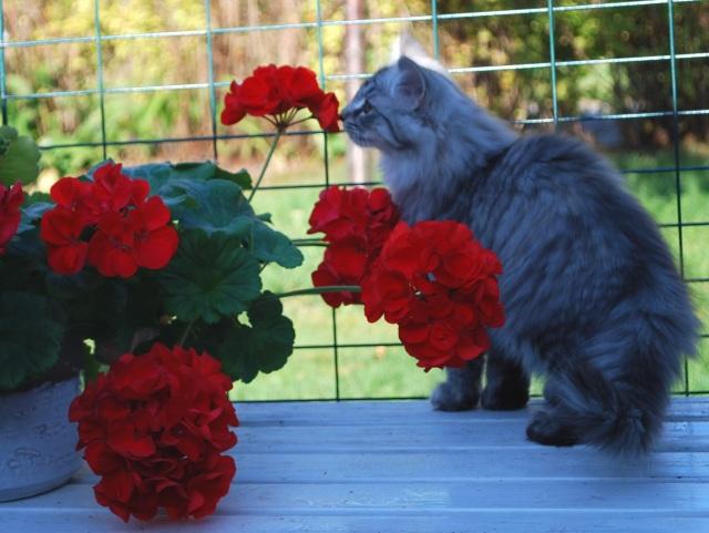 Malva undrar om pelargonerna luktar gott