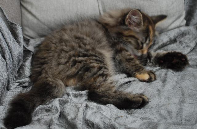 Marta sover