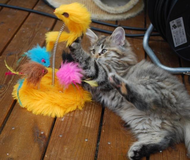 Även Mata Hari gillar den nya leksaken