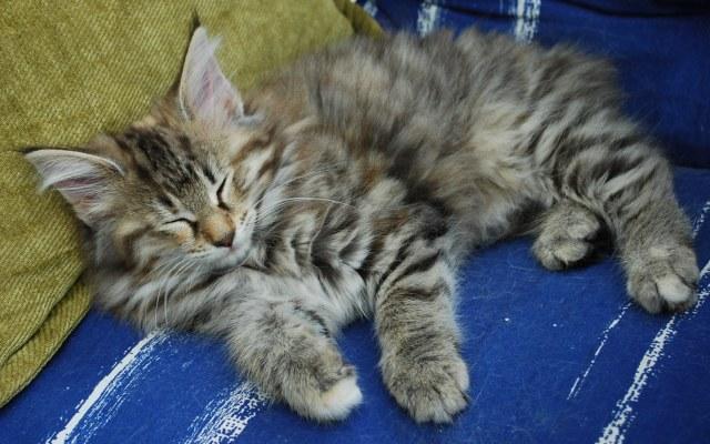 Mata Hari sover