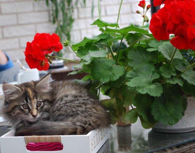 Vadå servettkorg? Är det inte en kattkorg att sova i???
