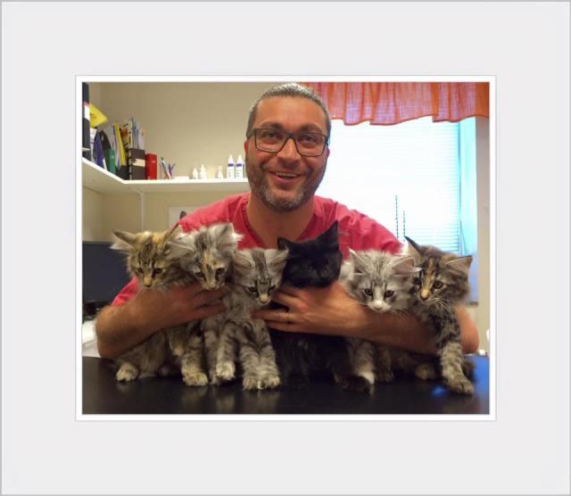 Kattungarn på besök på Jourkliniken för besiktning hos veterinär Aram
